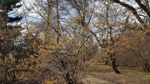 tavasz a Kámoni Arborétumban