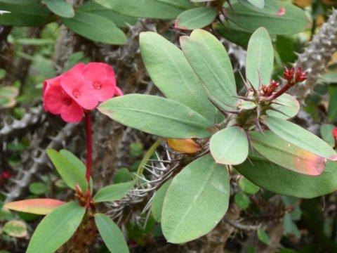 botanikus kert Gran Canarián